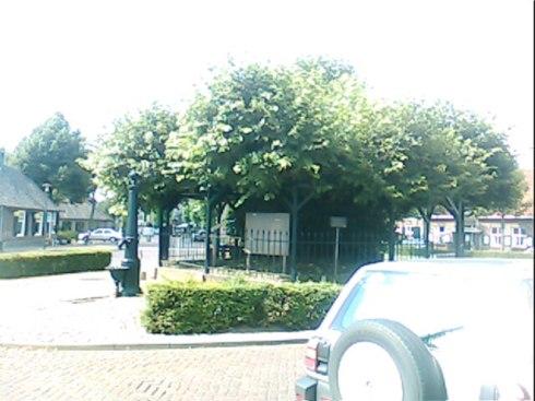 Copac secular în oraşul lui V.G.picture-140