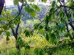 Condrița, vedere spre pădure