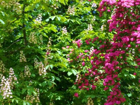 copaci cu flori 3