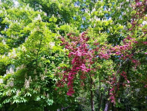 Copaci cu flori 4