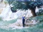 La umbra unui bătrân copac georgian